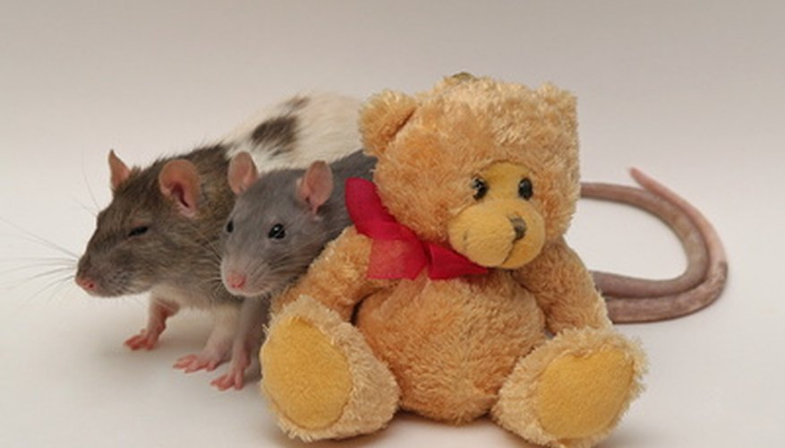 Mice will contaminate anything they touch.