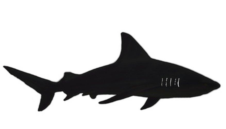 A shark has many fins and an oval body shape.