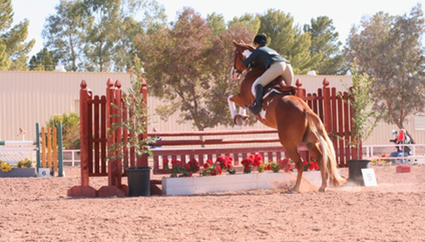 Improper jumping is one cause of injury to a horse's hamstrings.