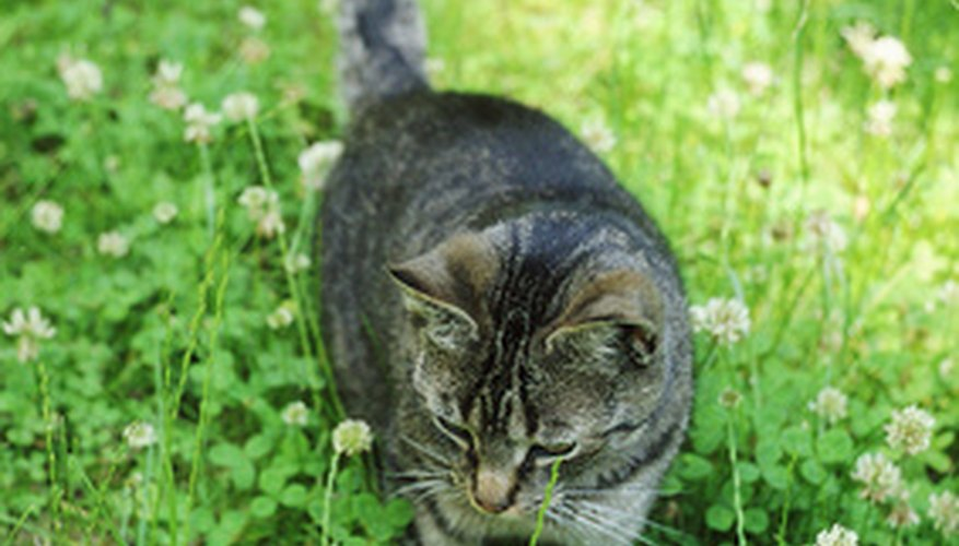 Long grass is more likely to be flea infested.