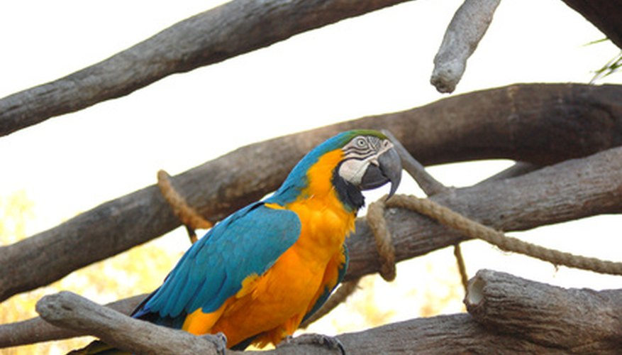A macaw aviary requires plenty of space.