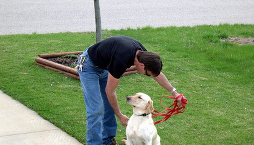 Training a service dog can be a rewarding experience.