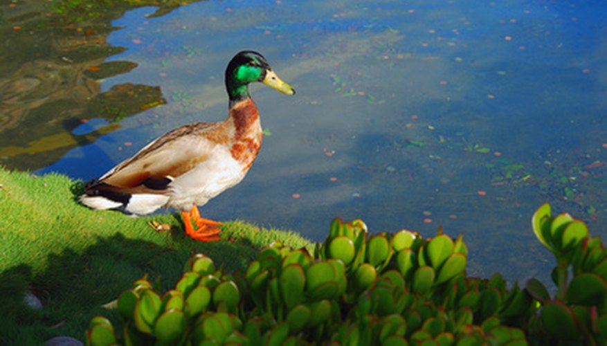 Adding mortar to a pond is useful for many reasons.
