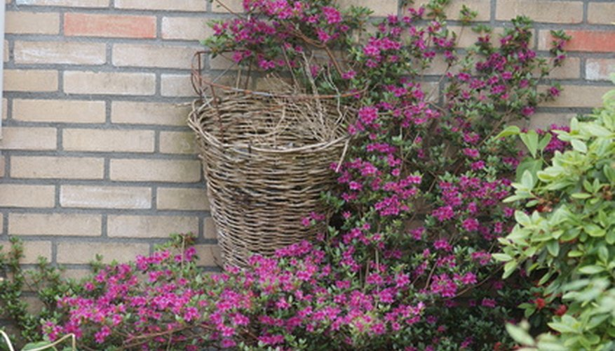 Azaleas are shade-loving bushes that make excellent focal points in a landscape design.