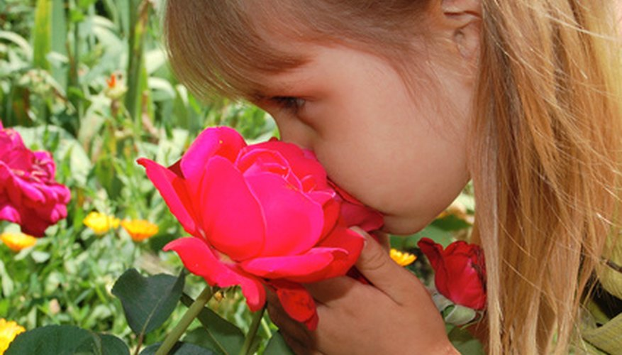 The sense of smell can be important in social interactions.