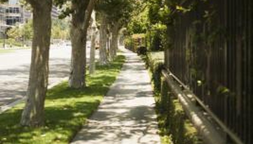 Trees and fences should be kept separate when possible.