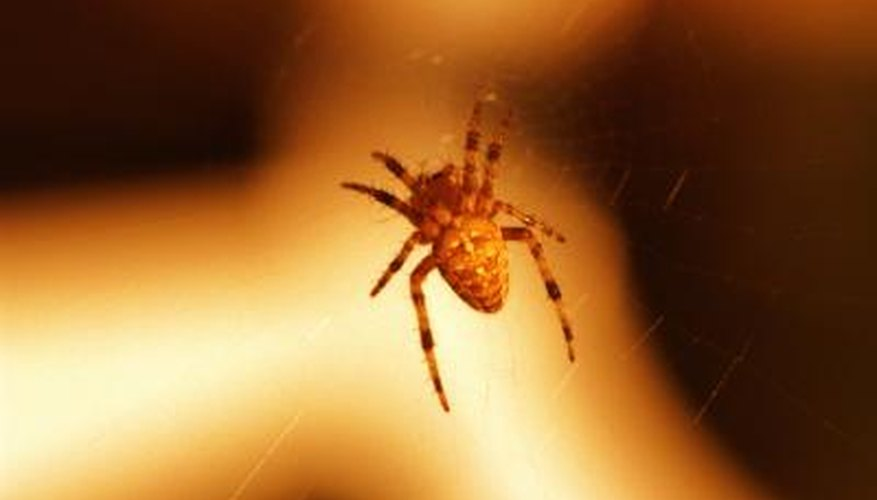 Prevent spiders from entering the home by sealing cracks around windows and doors.