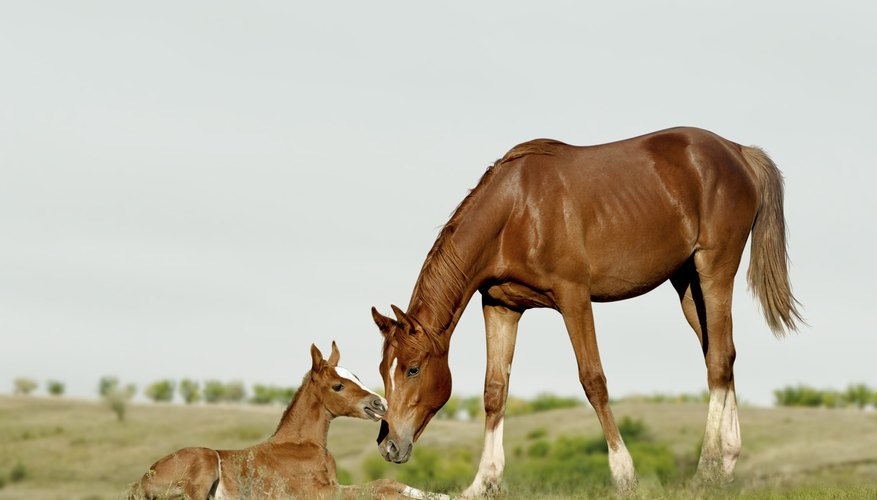 Foal with mother in field
