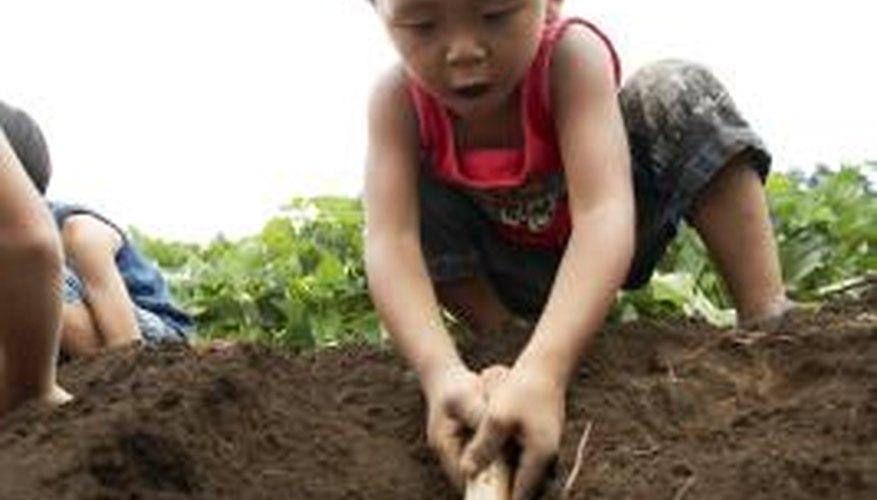 A fertile, moist but well-drained garden soil is best for dipladenia plants.