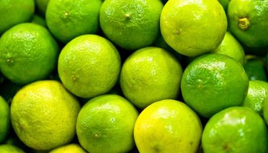The essence of fresh limes makes an ideal accompaniment to olive oil -- it adds a crisp, pleasant piquancy, and cuts the velvety richness of the oil.