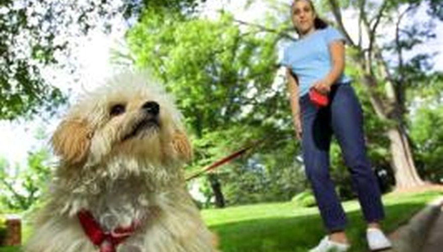 A dog harness will give owners greater control over larger breeds.