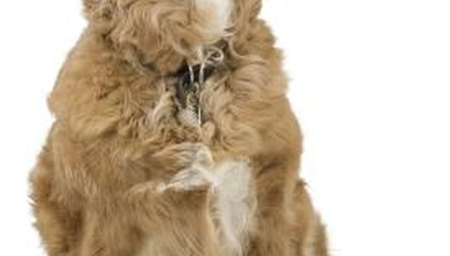 Take your dog to the vet if you notice any skin abnormalities.