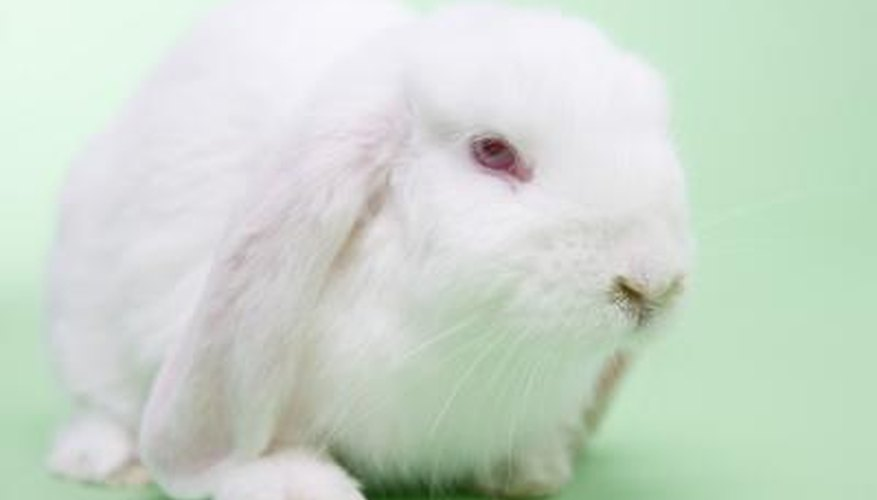 A healthy rabbit diet does not include rice cakes.