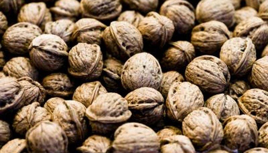 Even dwarf trees produce high walnut yields.