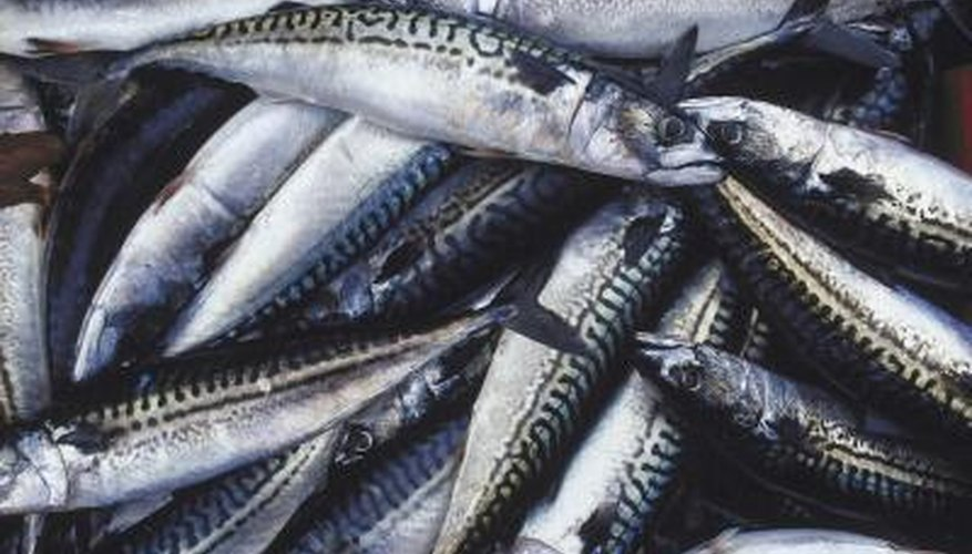 Cleaning mackerel before cooking them is an important step.