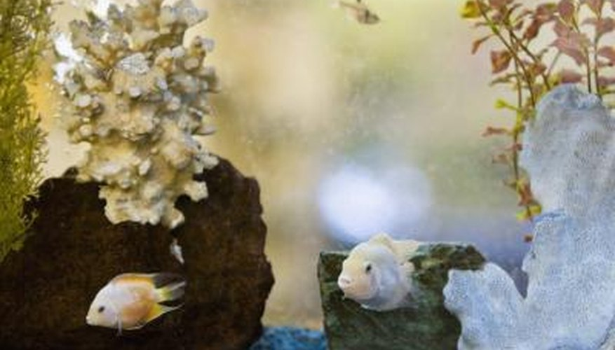 An acrylic plastic fish tank might display scratches and discolouration over time.