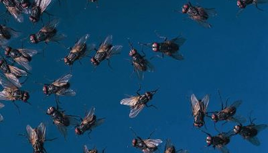 The outdoors is filled with annoying insects.