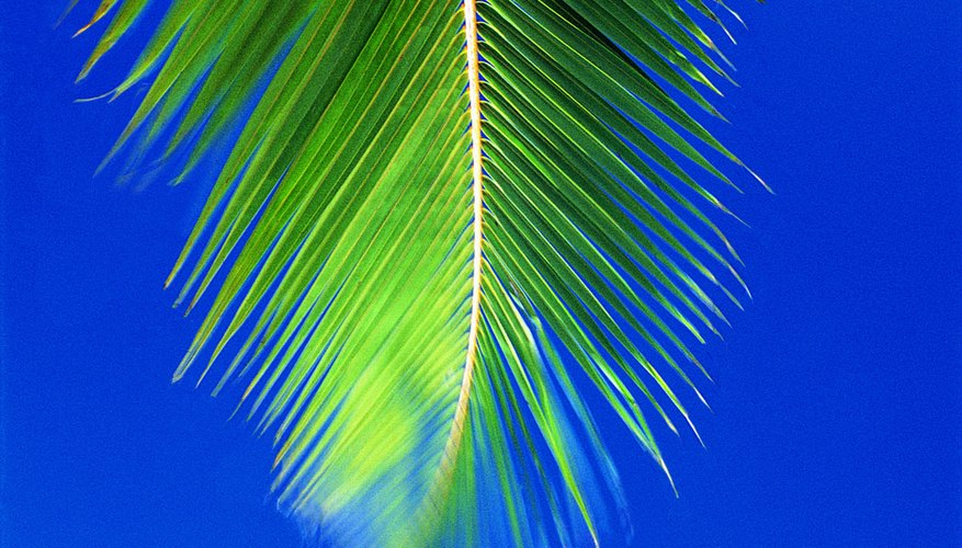 Waving a palm frond can be a fun way to learn about Luke 19.