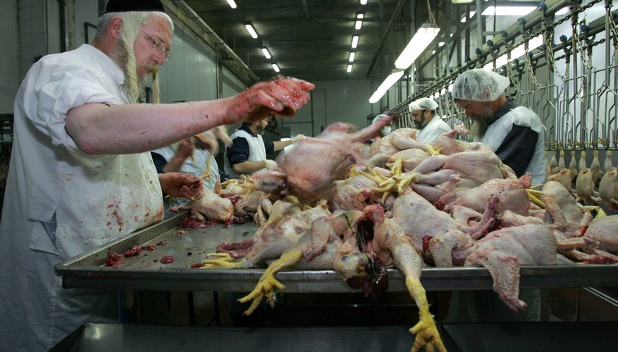 Meat must be carefully butchered in  Islam and Judaism.