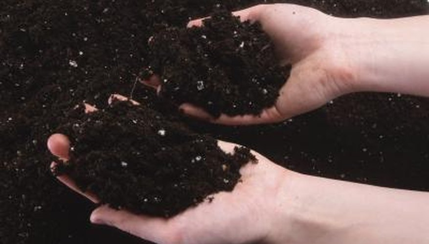 Healthy soil has a balance of nutrients to feed your lawn.