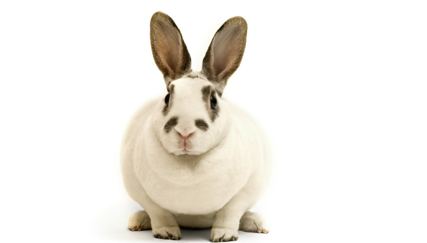 Rabbits typically give birth to between 4 and 12 kits.