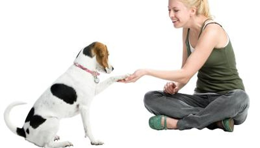 Check your dog's paws regularly for damage or swelling.