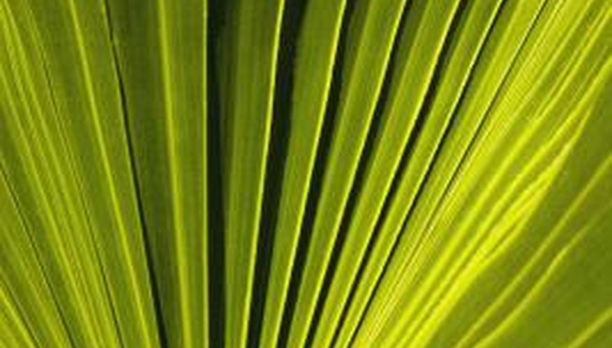 Preserve fronds that are at their peak of appearance.