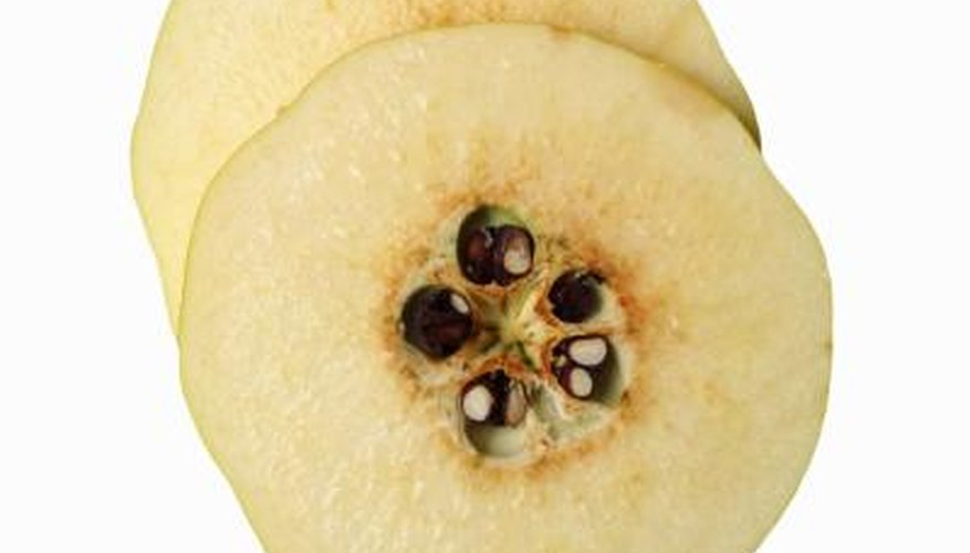 Slices of a quince fruit reveals how closely related it is to the apple.