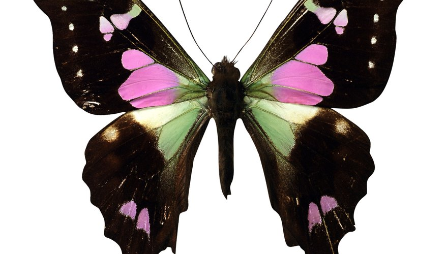According to American folklore, a butterfly in the home may symbolize a wedding.