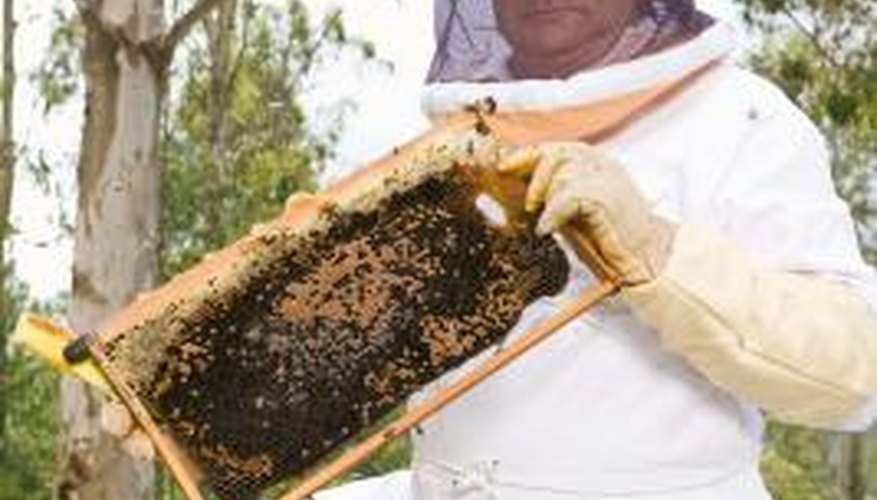 Splitting an overcrowded hive is one way to reduce swarming.