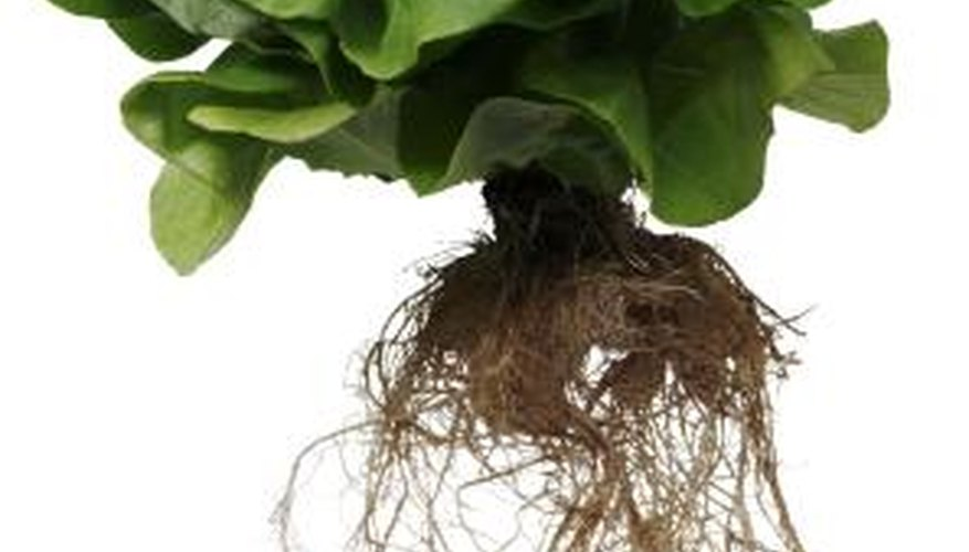 Hydroponic systems don't use any soil.
