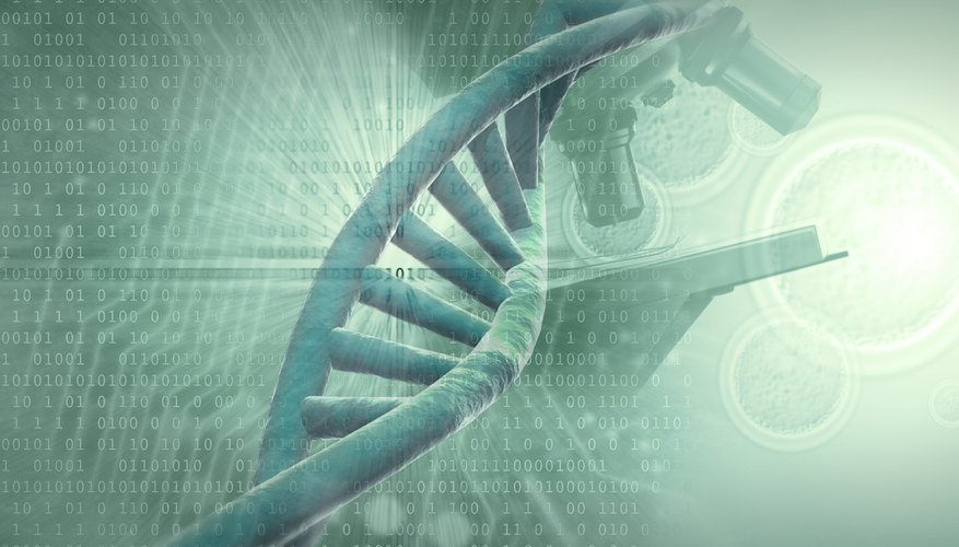 DNA is often thought of as the