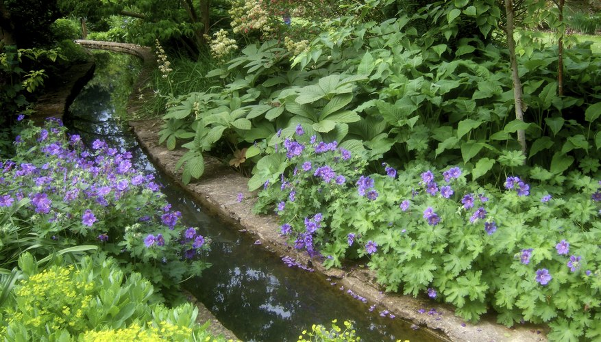 A rill can be a feature in a flower garden.