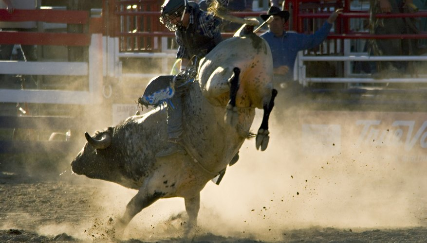 Riding a bucking bull takes courage, strength, skill and stamina.