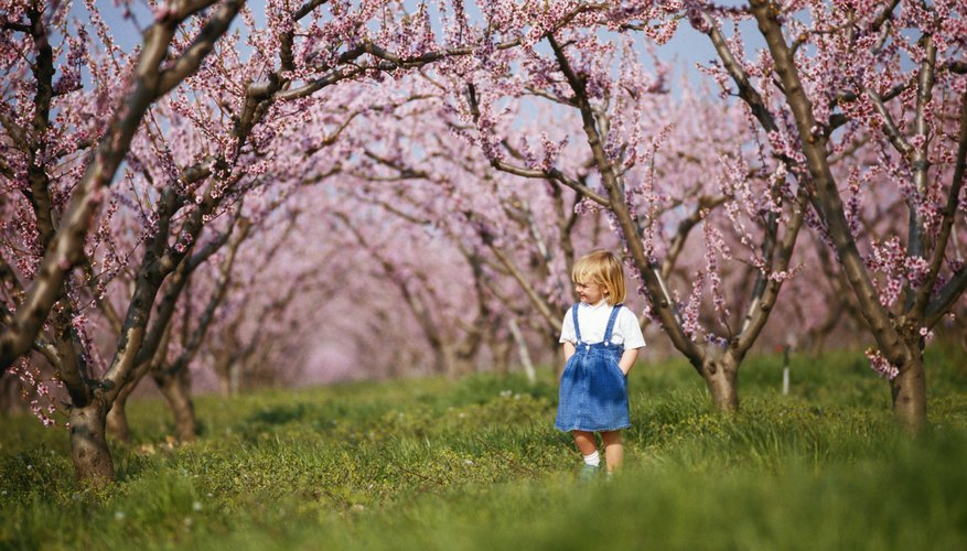 In the Torah, fruit trees symbolize God's provision and generous goodness.