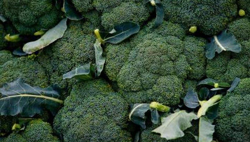Fresh broccoli should have a bright green colour.