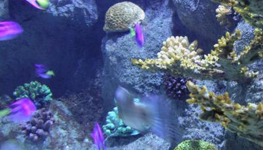 Toadstool corals are easy to care for.