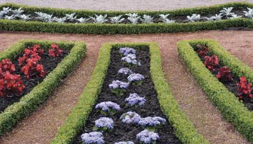 Boxwood shrubs are often used in formal gardens to outline the garden beds.