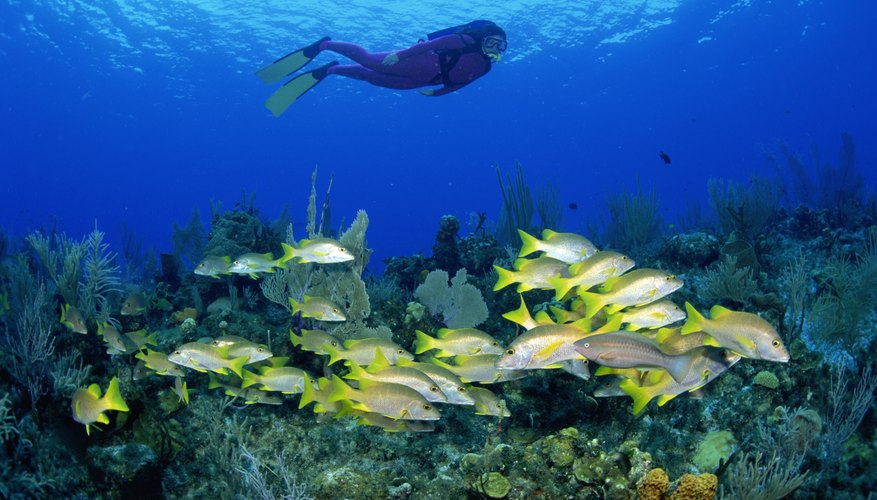 Scuba diving is an excellent skill to have if you are interested in a marine biology career.