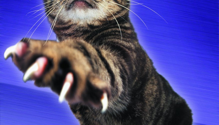 Cat declawing remains a controversial issue.