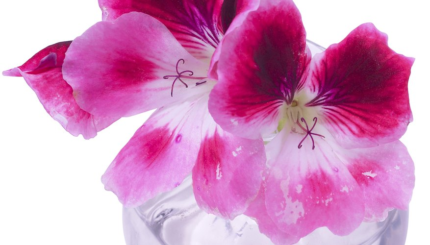 Preserve flowers with glycerine.