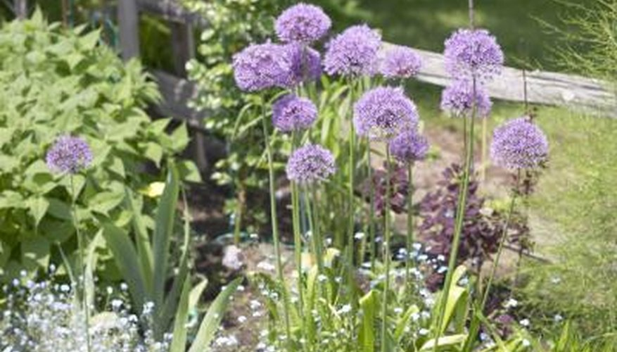 Herbs can be grown in pots or in the garden.