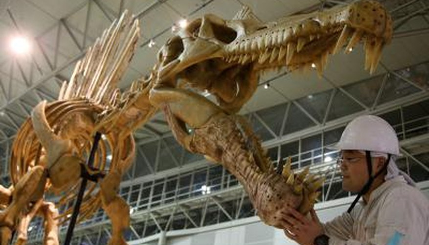 Spinosaurus is known for its large spinal fin.