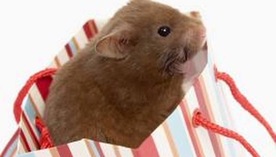 Balsa and fruit wood are OK for hamsters.