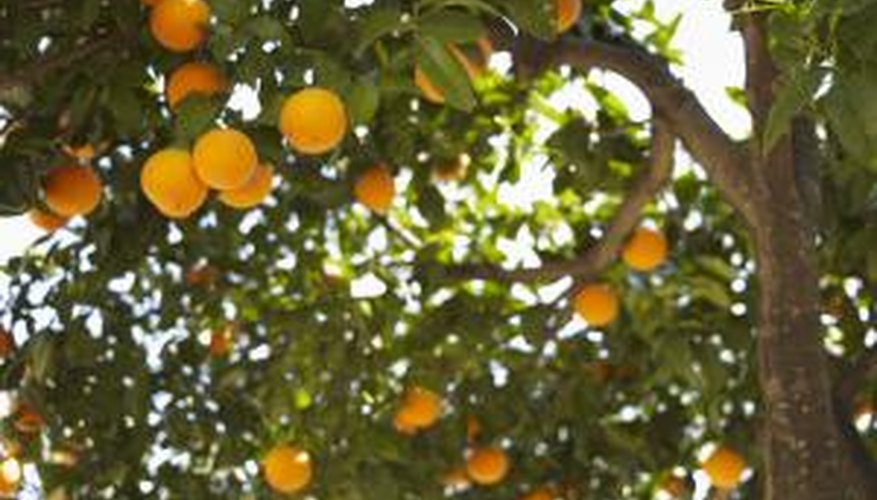 Oranges are high in vitamin C and other antioxidants.