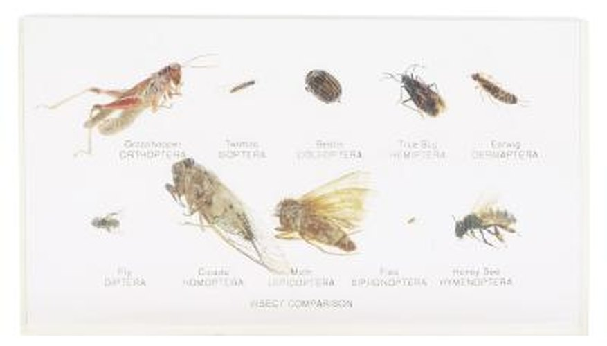 Keep your cat flea-free with natural items to get rid of these pests.