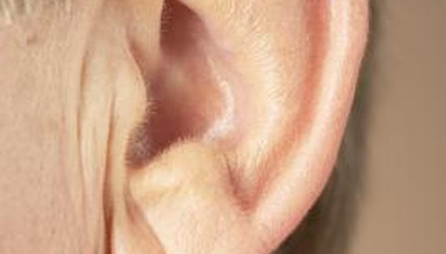 Every animal (particularly mammals) has its own unique ear features.