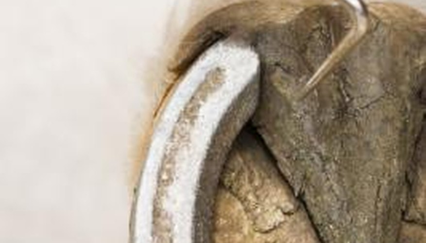 The frog is the triangular section on the underside of a horse's hoof.