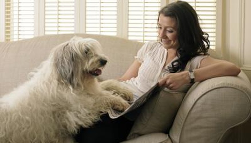 Labradoodles are a poodle and Labrador retriever mix.