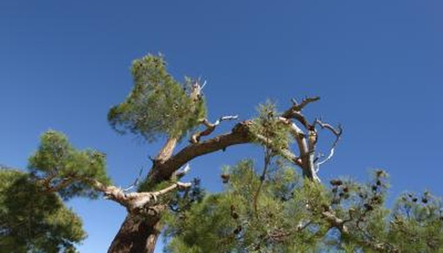 High wind is the main cause of broken branches.